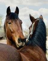 verabreichung und dosierung bei pferde